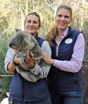 Wholly Natural's adopted koala, Coen, rescued by the Australian Koala Foundation and cared for at Country Paradise preserve