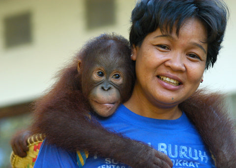 Borneo Orangutan Survival Foundation caring for rescued orangutans