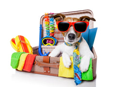 A little dog in a suitcase wearing sunglasses