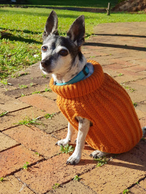 Kipper in his new sweater, keeping track of life on the farm
