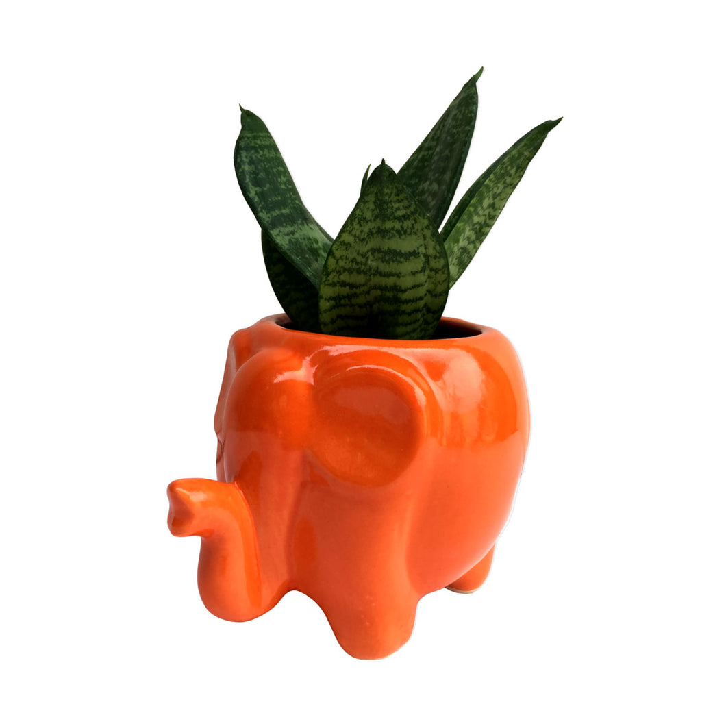 Sansevieria Plant in Glossy Red Elephant Planter