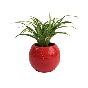 Spider Plant in Glossy Red Football Planter
