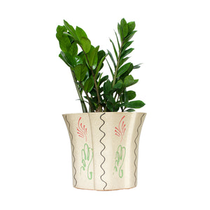 Solid Zamia in Big Floral Planter