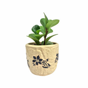 Peperomia Plant in Leaf Emboss Planter