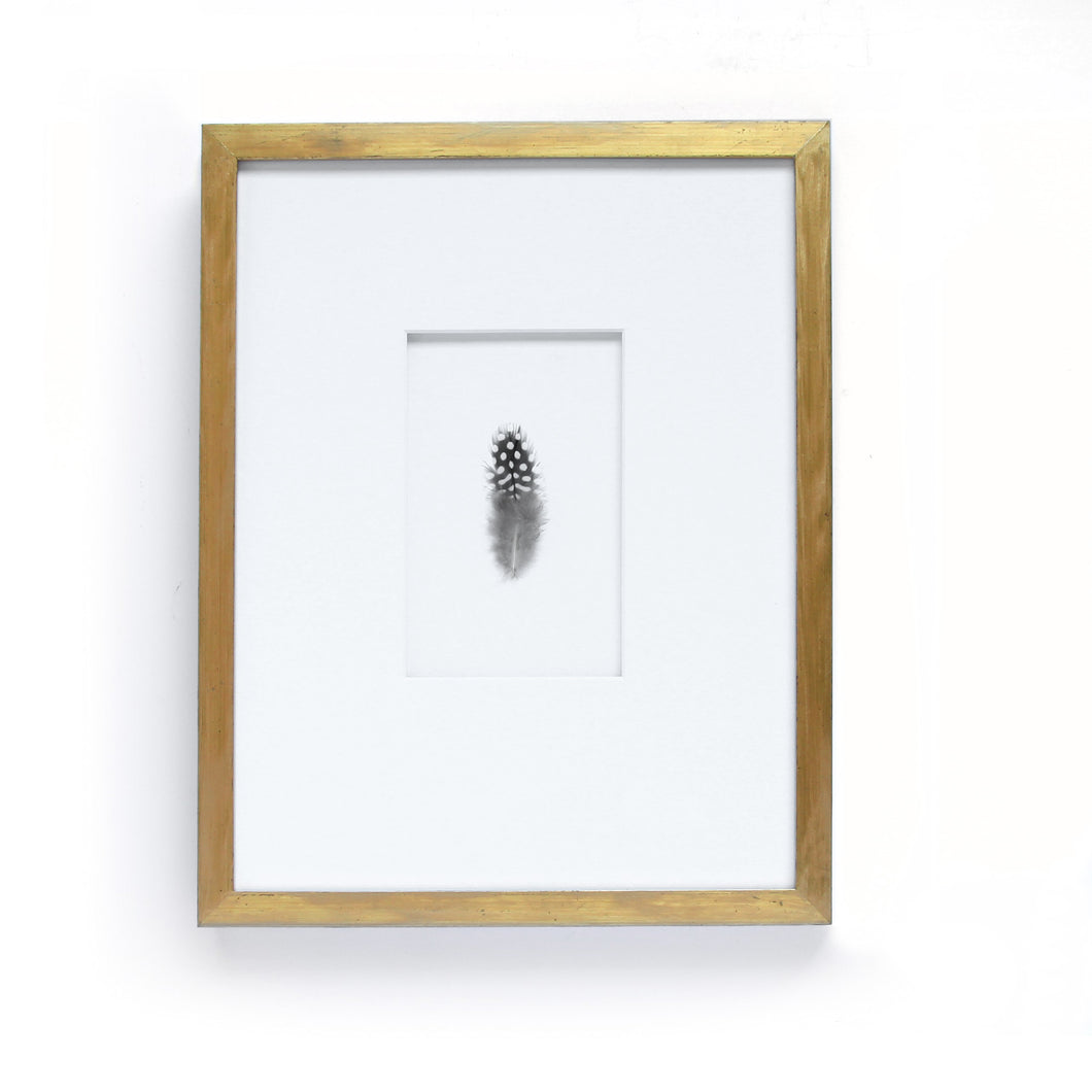Exotic Guinea Fowl Feather in Antique Gold Leaf Frame