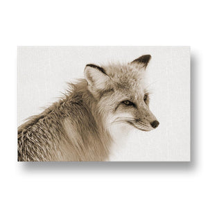 Red Fox Canvas Print in Sepia