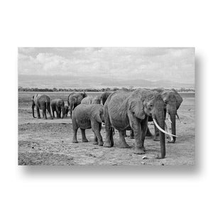 Elephant Herd Canvas Print in Black and White