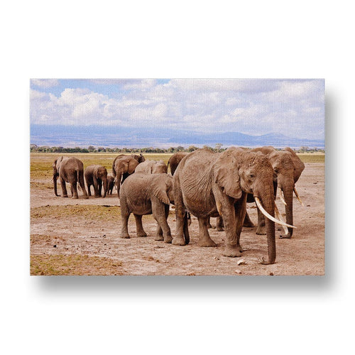 Elephant Herd Canvas Print in Colour