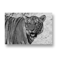 Tiger Canvas Print in Black and White