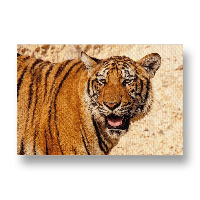Tiger Canvas Print in Colour