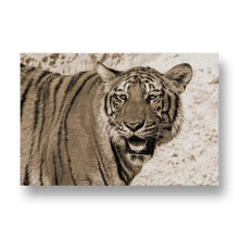 Tiger Canvas Print in Sepia