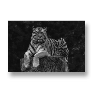 Tiger in Tree Canvas Print in Black and White