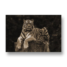 Tiger in Tree Canvas Print in Sepia