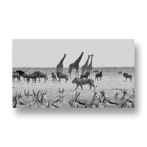 Lion between Animals Canvas Print in Black and White