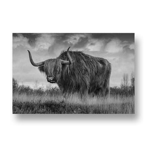 Bull Canvas Print in Black and White
