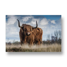 Bull Canvas Print in Colour