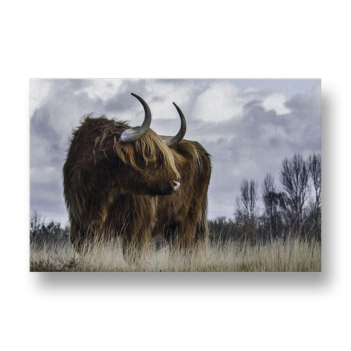 Cow Canvas Print in Colour