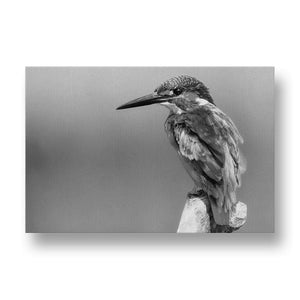Kingfisher Canvas Print in Black and White