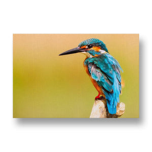 Kingfisher Canvas Print in Colour