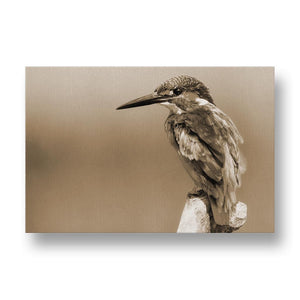 Kingfisher Canvas Print in Sepia