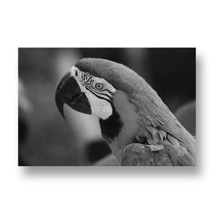 Parrot Canvas Print in Black and White
