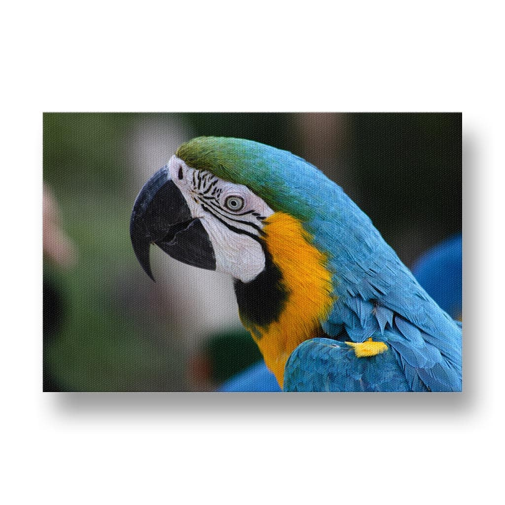 Parrot Canvas Print in Colour