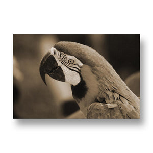 Parrot Canvas Print in Sepia