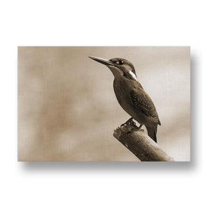 Alcedo Atthis Canvas Print in Sepia
