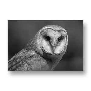 Barn Owl Canvas Print in Black and White