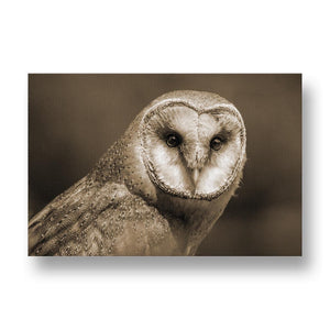 Barn Owl Canvas Print in Sepia