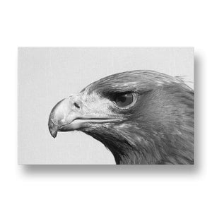 Adler Canvas Print in Black and White