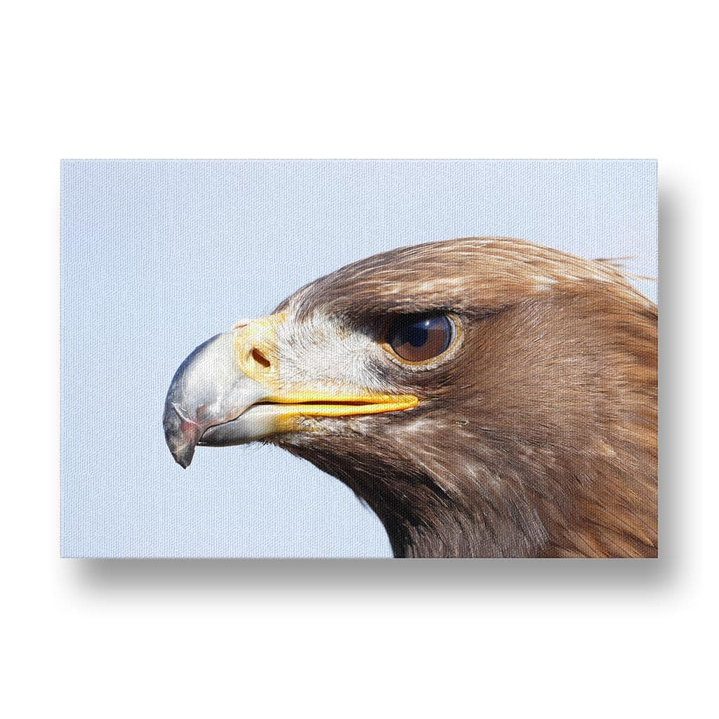 Adler Canvas Print in Colour