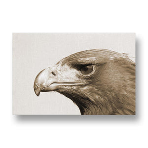 Adler Canvas Print in Sepia