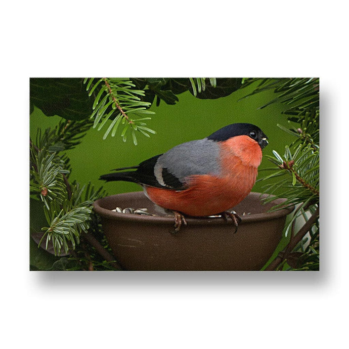 Bullfinch Canvas Print in Colour
