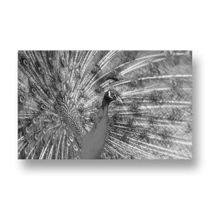 Peacock Canvas Print in Black and White