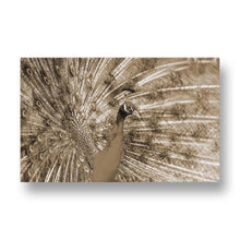 Peacock Canvas Print in Sepia