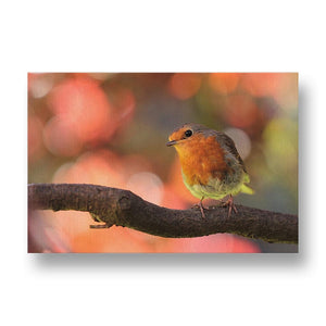 Robin Canvas Print in Colour