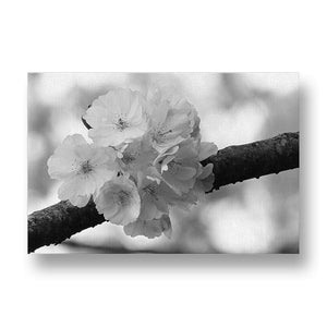 Cherry Blossom Canvas Print in Black and White