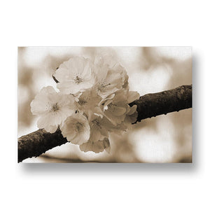 Cherry Blossom Canvas Print in Sepia