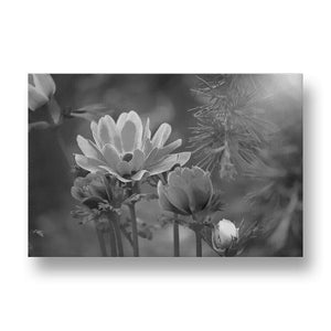 Blue Anemone Canvas Print in Black and White