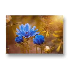 Blue Anemone Canvas Print in Colour