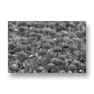 Red Blossoming Flowers Canvas Print in Black and White