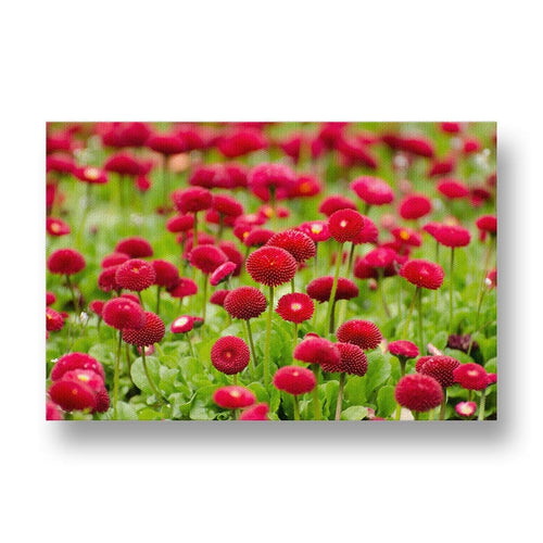 Red Blossoming Flowers Canvas Print in Colour