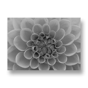 Orange Dahlia Canvas Print in Black and White