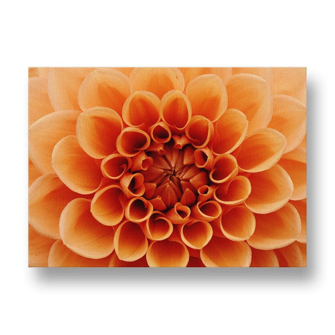 Orange Dahlia Canvas Print in Colour