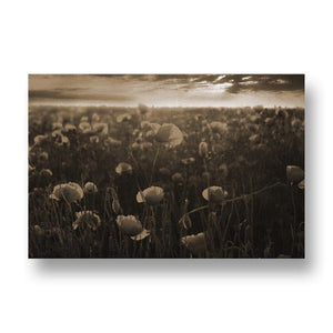 Red Poppies at Sunset Canvas Print in Sepia