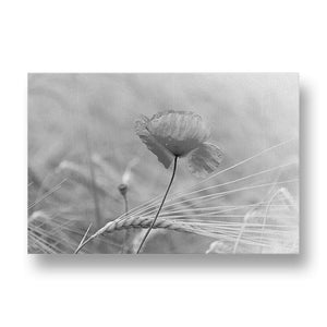Lone Red Poppy Canvas Print in Black and White