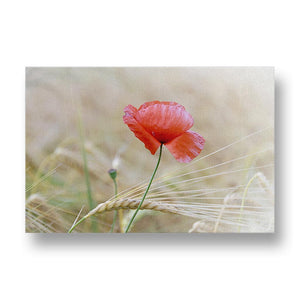 Lone Red Poppy Canvas Print in Colour