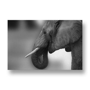 Elephant Wrinkles Canvas Print in Black and White