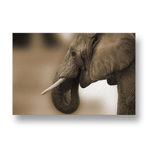 Elephant Wrinkles Canvas Print in Sepia